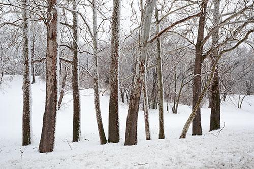2013-02-26-dougherty-016-snow